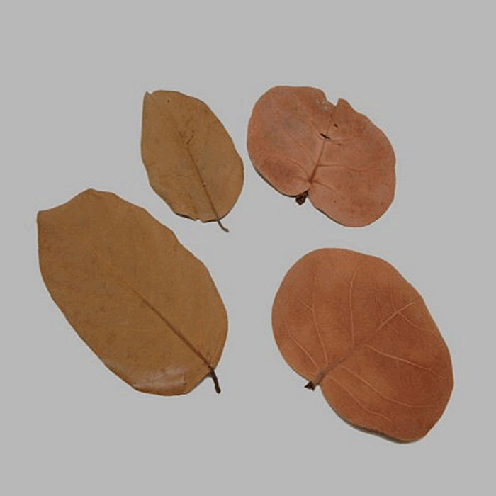 leaves dried color brown 4 pcs
