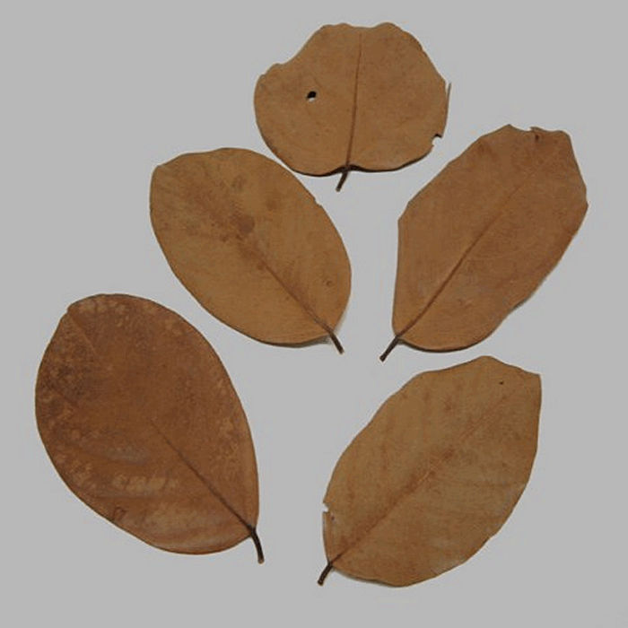 leaves dried color brown 5 pcs