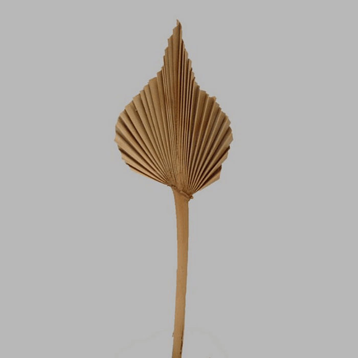 chinese fan leaf on a stick color natural 42 x 9 cm