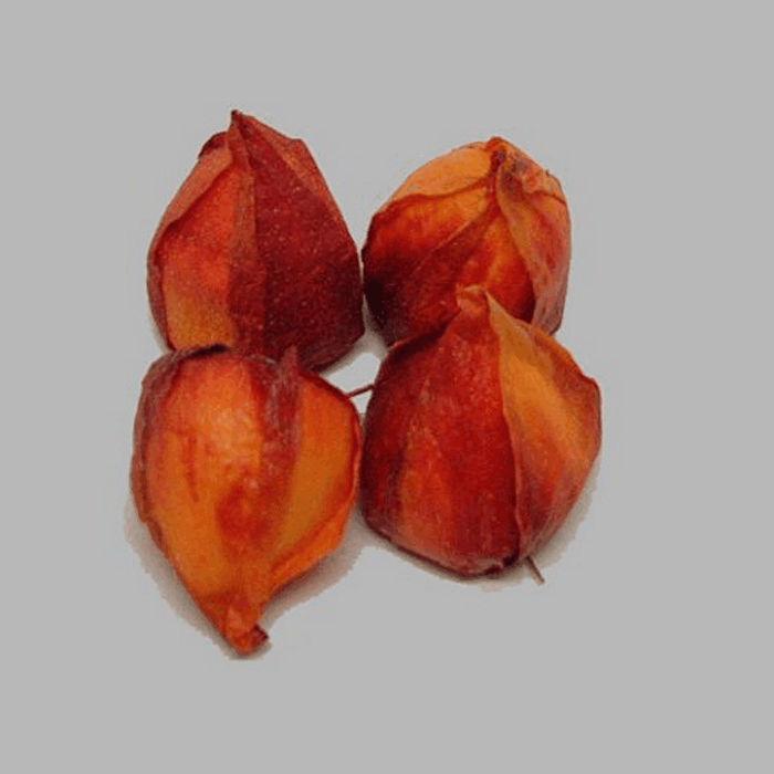bloem oranje lampion