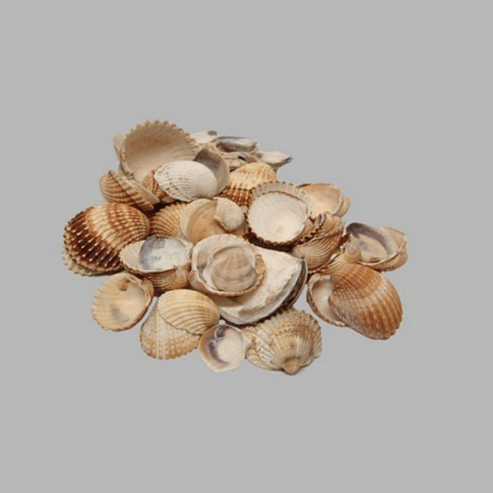 coquillages de mer couleur naturelle 200 gr