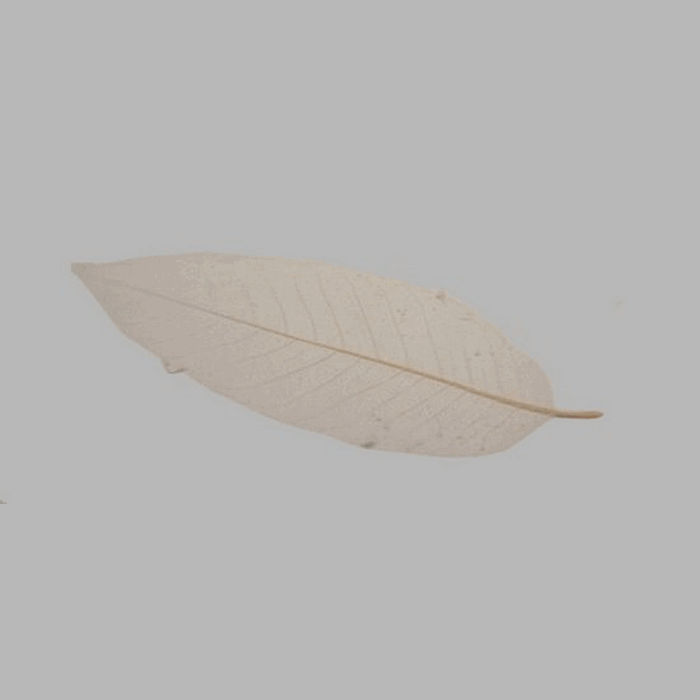 skeleton leaf color natural 25 x 9 cm 5 pcs