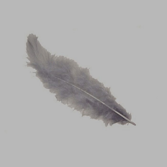 feathers for decoration color grey 5 g