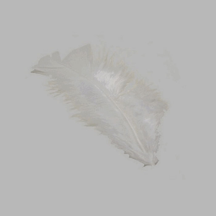 feathers for decoration color white small size