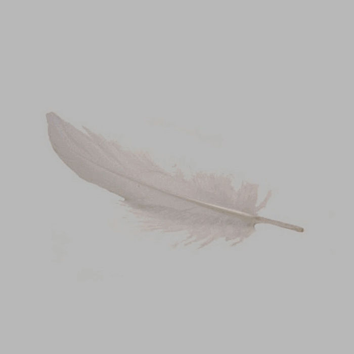 feathers for decoration color white 15 g